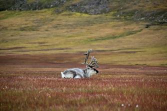 Copyright: Marcela Cardenas / www.nordnorge.com / Longyearbyen