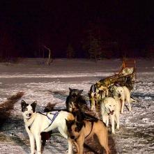 Tromsø, Hundeschlitten-Tour, Copyright: Janina Graf