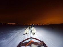 Hundeschlitten-Safari in Kirkenes