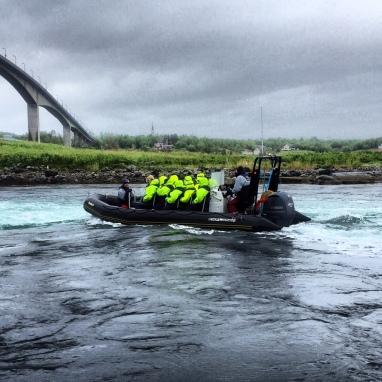 Speedboot-Safari in Bodø/Saltstraumen