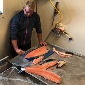 Ausflug zu den Lachsen in Brønnøysund