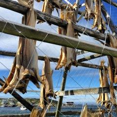 Der Stockfisch hängt draußen in Gjesvær