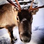 Ausflug zum Schneehotel bei Kirkenes